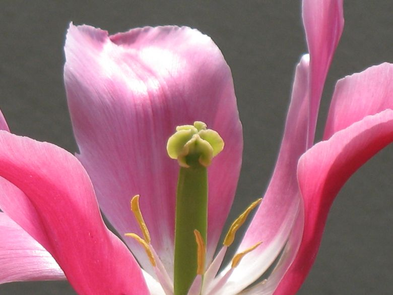 Blüte als Symbol