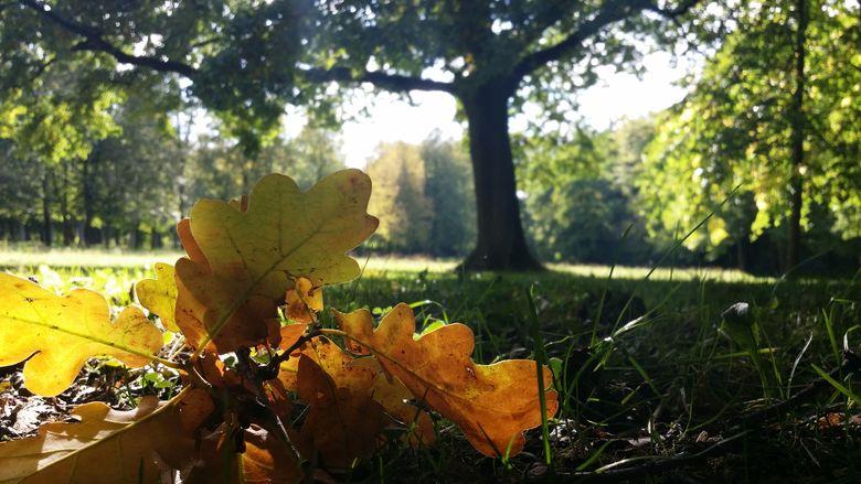 Blätter und ein Baum