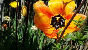Frühlingsspaziergang, Gehmeditation