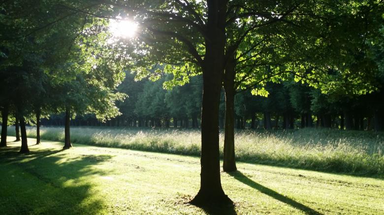 Sommerlicht im Park